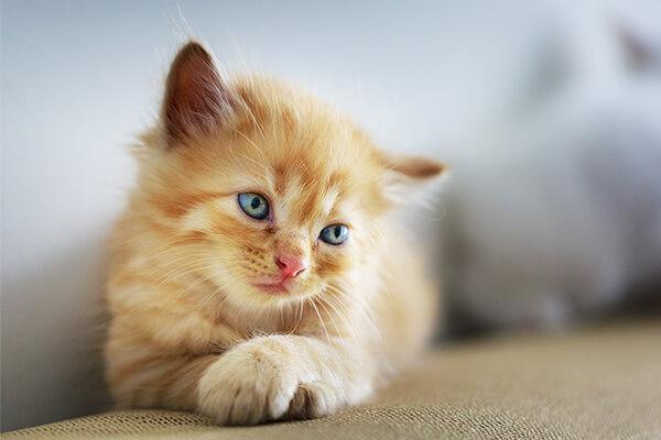 ネコちゃんの病気に注意して幸せなペットライフを
